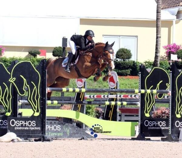 Horse jumping over an obstacle